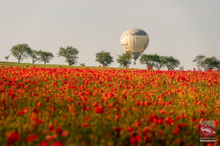 Brockenballon über sommerlichem Mohnfeld (Charlottenlust)